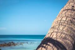 Tropikalny podróży plaży wakacji tło z drzewko palmowe bagażnikiem na wibrującym błękitnym zamazanym dennym backgroud Obrazy Stock