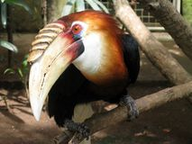 tropikalny ptak obrazy stock