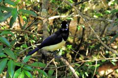 Tropikalny ptak. Zdjęcie Royalty Free