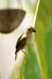 Tropikalny Ptak Zdjęcie Royalty Free