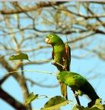 Tropikalny Ptak zdjęcia stock