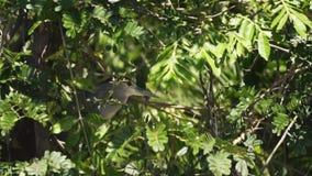Tropikalny ptak umieszczał w drzewie cicho ma odpoczynek zbiory