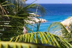 Tropikalny ptak w drzewku palmowym Zdjęcia Stock
