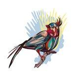 Tropikalny ptasi obsiadanie na gałąź fotografia stock