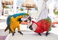 Tropikalny ptasi zakończenie Obraz Stock