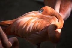 Tropikalny ptasi zakończenie Obrazy Royalty Free