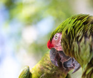 Tropikalny ptasi zakończenie Fotografia Stock
