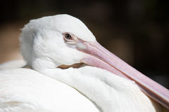 Tropikalny ptasi zakończenie Obraz Royalty Free