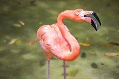 Tropikalny ptasi zakończenie Zdjęcia Royalty Free