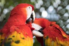Tropikalny ptasi zakończenie Zdjęcie Royalty Free