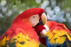 Tropikalny ptasi zakończenie Zdjęcia Stock