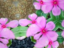 tropikalny różowy kwiat Zdjęcia Stock