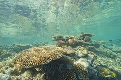 tropikalny rafa koralowa underwater zdjęcie stock