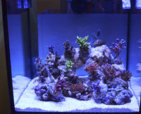 Tropikalny rafowy koral Zdjęcie Stock
