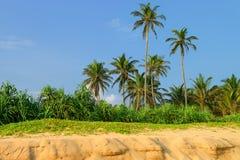 Tropikalny raj Obrazy Royalty Free