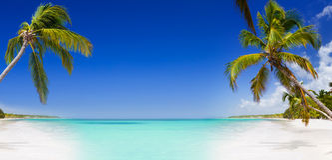 Tropikalny raj z drzewkami palmowymi Zdjęcie Stock