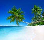 Tropikalny raj z drzewkiem palmowym Obrazy Royalty Free