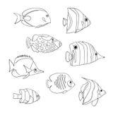 Tropikalny rybi ikona set Odosobneni wektorów charaktery Butterflyfish, błazenu Triggerfish, Damsel, Anemonefish, Angelfish, Clow royalty ilustracja