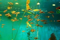 Tropikalny rybiego zbiornika akwarium Zdjęcie Royalty Free