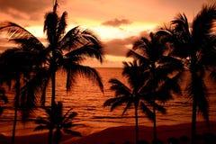 tropikalny słońca Obrazy Stock