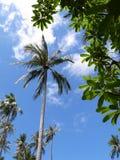 Tropikalny słoneczny dzień Zdjęcie Stock