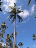Tropikalny słoneczny dzień Zdjęcie Royalty Free