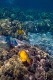 tropikalny sceny pod wodą Obrazy Royalty Free