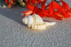 Tropikalny Seashell na plaży Zdjęcie Royalty Free