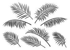 Tropikalny set palmowi liście Fotografia Stock