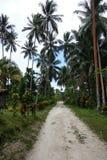 Tropikalny spacer palmy Zdjęcie Royalty Free