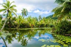 Tropikalny staw i drzewka palmowe Obrazy Stock