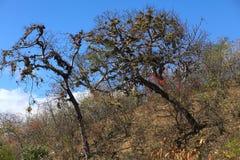 Tropikalny Suchy las w Południowym Ekwador Obraz Stock