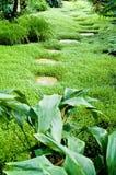 tropikalny szklarniany sposób synklina Obraz Royalty Free