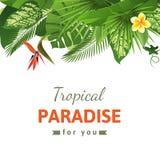 Tropikalny tło Zdjęcia Royalty Free