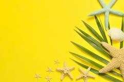 tropikalny tło Drzewko palmowe gałąź z rozgwiazdą i seashell na żółtym tle Podróż kosmos kopii Obrazy Stock