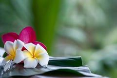 tropikalny tło, winieta świezi liście Obraz Royalty Free