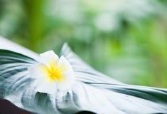 tropikalny tło, winieta świezi liście Obrazy Royalty Free
