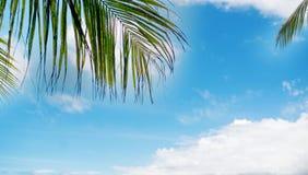 Tropikalny tło z kokosowymi drzewkami palmowymi Fotografia Stock