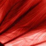 Tropikalny textured liść w kolorze żywy koral obrazy stock