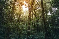 Tropikalny tropikalnego lasu deszczowego Doi Inthanon park narodowy Zdjęcia Royalty Free
