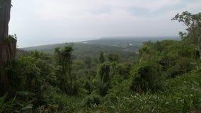 Tropikalny tropikalnego lasu deszczowego ulistnienie, Orocue, Kolumbia zbiory wideo