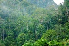 Tropikalny tropikalny las deszczowy fotografia stock