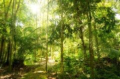 Tropikalny tropikalny las deszczowy Obrazy Royalty Free