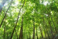 Tropikalny tropikalny las deszczowy Fotografia Royalty Free