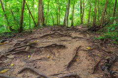 Tropikalny tropikalny las deszczowy Zdjęcia Royalty Free