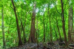Tropikalny tropikalny las deszczowy Obrazy Stock