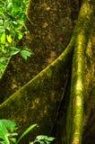 Tropikalny tropikalny las deszczowy - Costa Rica Fotografia Royalty Free