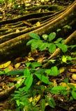 Tropikalny tropikalny las deszczowy - Costa Rica Fotografia Stock