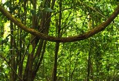 Tropikalny tropikalny las deszczowy - Costa Rica Obrazy Stock