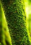 Tropikalny tropikalny las deszczowy - Costa Rica Zdjęcie Royalty Free